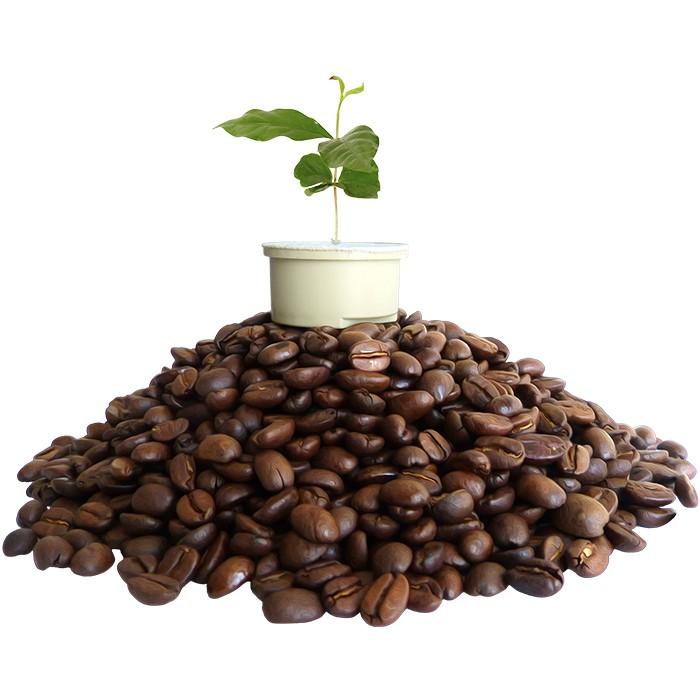 Nachhaltige Kaffeekapseln.
