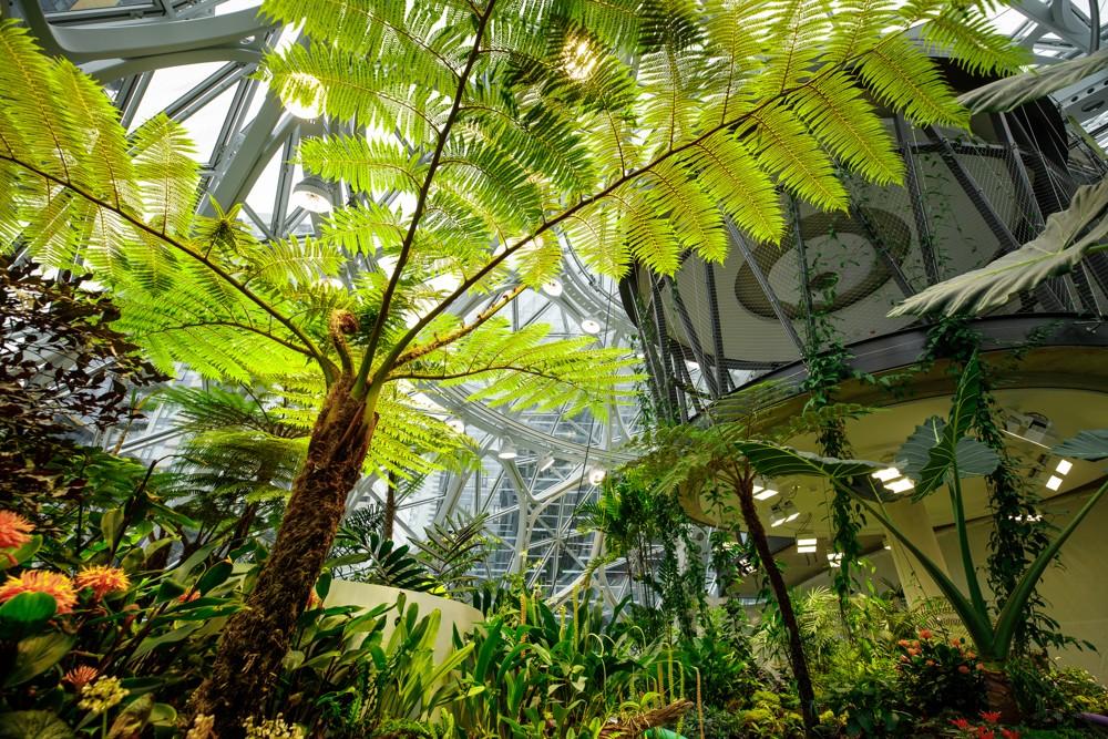 Besprechungen finden in The Spheres in Baumhäusern, an Bächen und neben Wasserfällen statt.