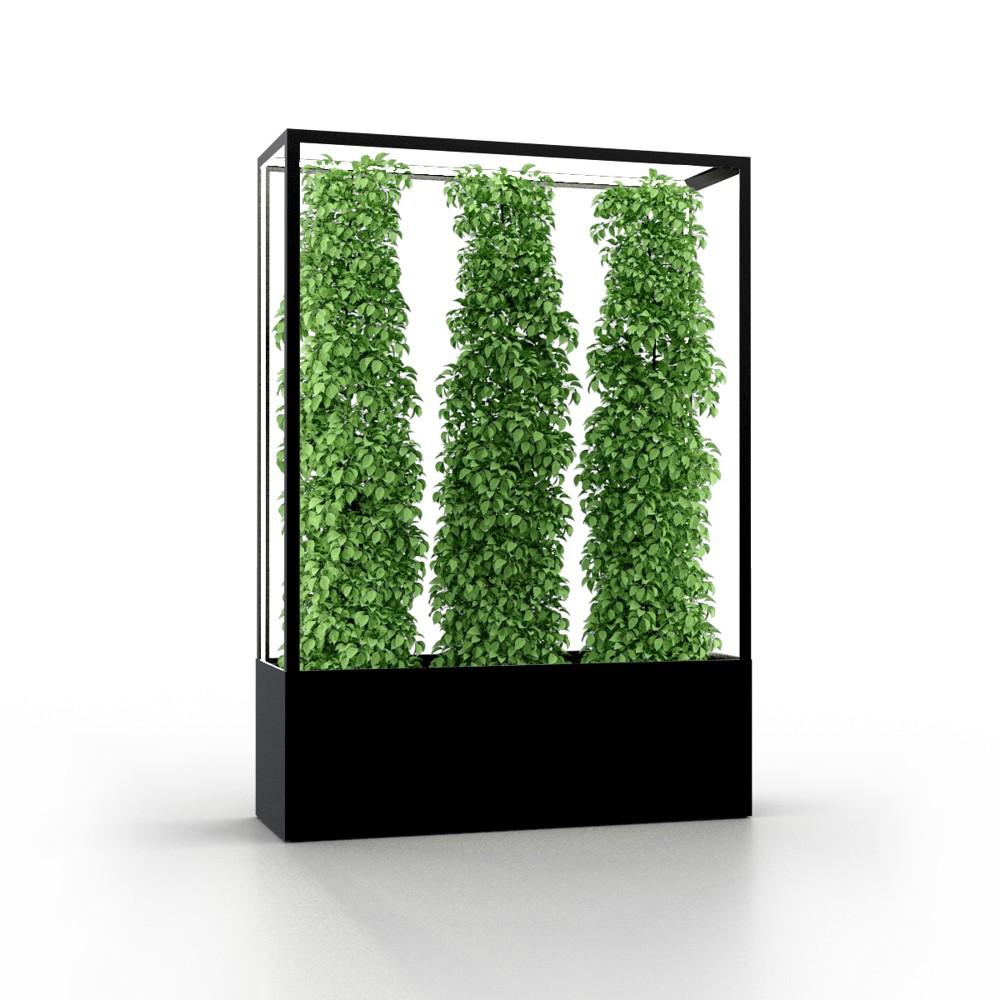 Cube Planted Collection von lasfera