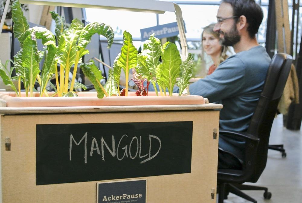 Das Start-up Ackerpause bringt frisches Gemüse ins Büro. Abbildung: Ackerpause