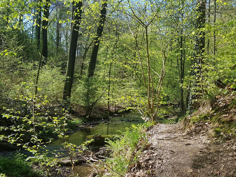 Ein Tag im Wald steigert die natürlichen Abwehrzellen. Abbildung: WaldResort Hainich