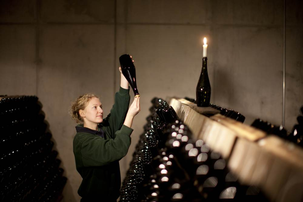 Qualitätskontrolle der klassischen Flaschengärung. Abbildung: Sächsisches Staatsweingut GmbH
