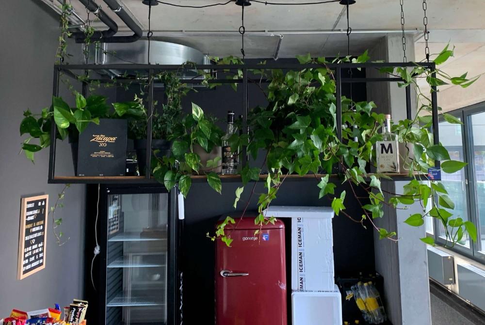 Abbildung: Plantclub