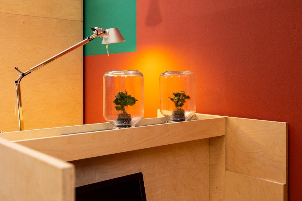 Die Coffea arabica des niederländischen Labels Pikka Plant lebt im eigenen Ecosystem eines verschlossenen Glases. Abbildung: Sascha Kreklau Fotografie